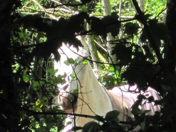 chrome white horse