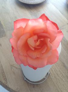kasia rose