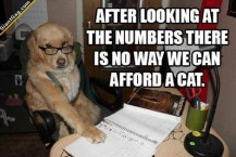 We Can't Afford A Cat