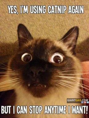 Yes I'm Using Catnip Again