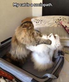 My Cat Is A Sociopath