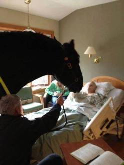 LOTL Rescue wrote Hospital allows a dying policeman to have a final visit from his beloved horse.