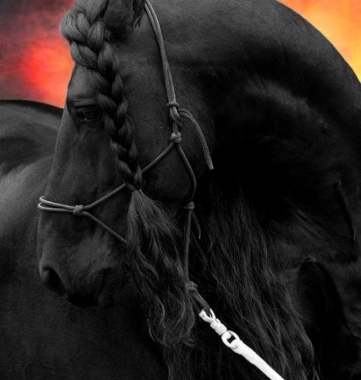 black-horse
