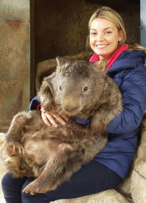 patrick the oldest and largest living wombat (4)