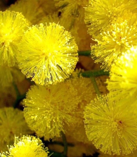 Yellow5