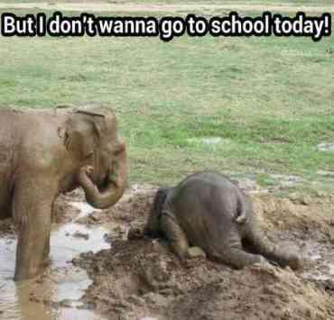 elephant-tantrum